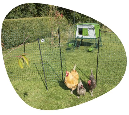omlet chicken fencing Poultry Centre Towcester