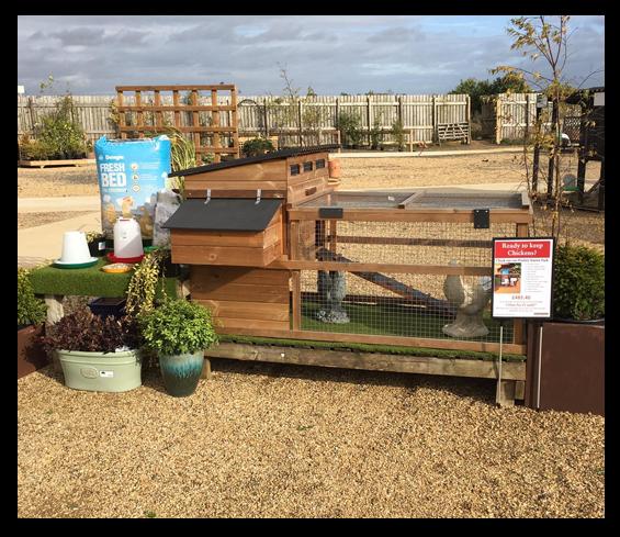 Poultry Starter Kit Poultry Centre Towcester